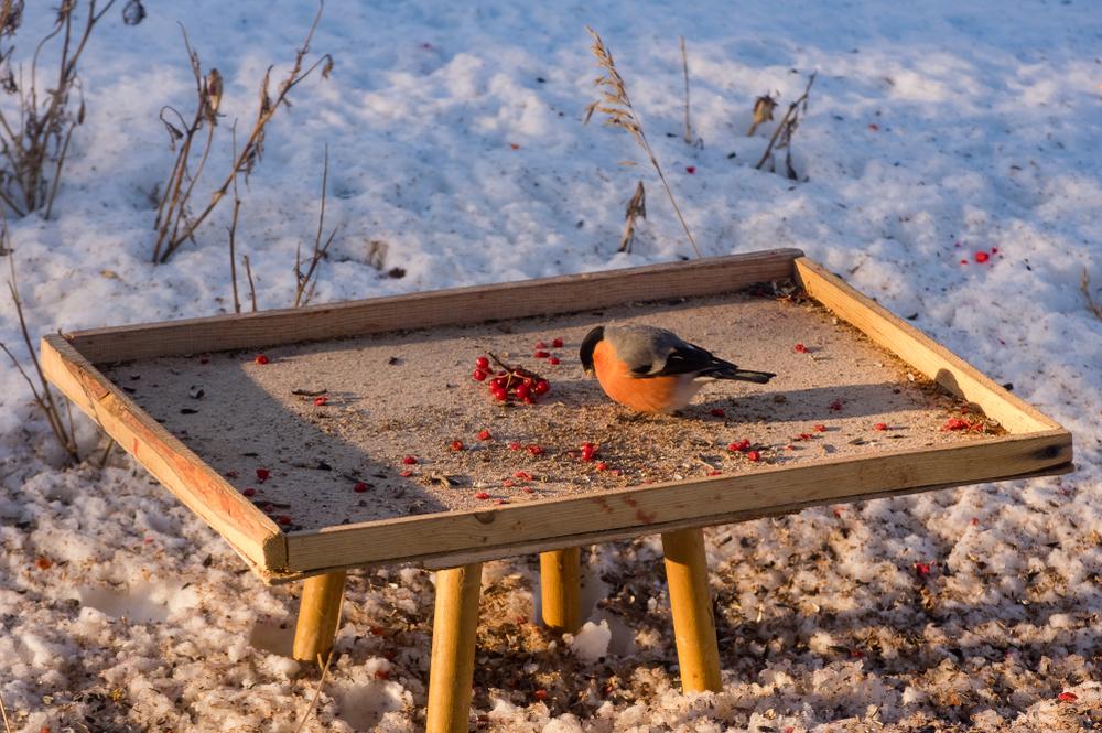 لماذا تغرد الطيور عند الفجر؟